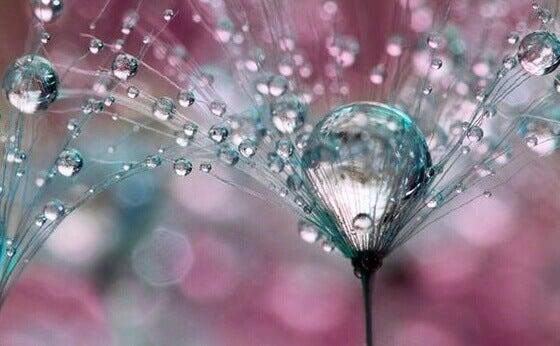 gouttes sur une fleur