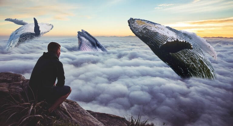 homme regardant des baleines
