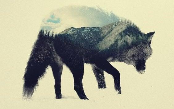 Le loup des steppes, une oeuvre pour réfléchir
