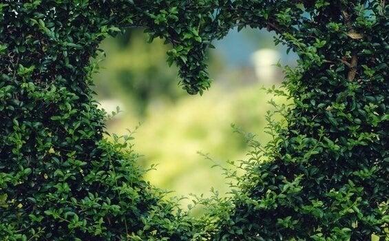 coeur dans un buisson