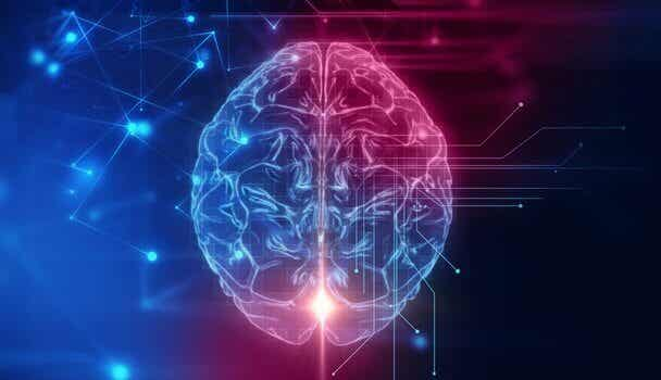 Le cortex orbitofrontal, siège de notre comportement social