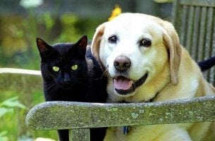 deuil de nos animaux de compagnie
