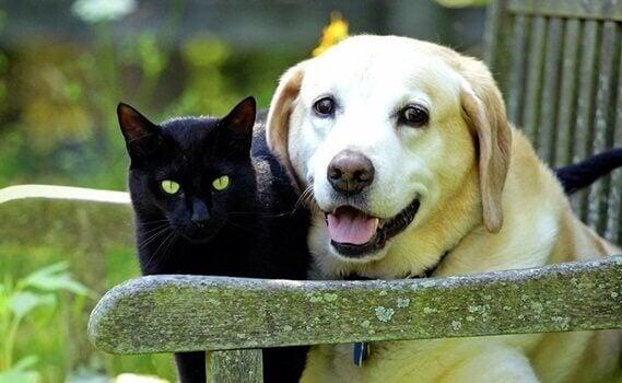 Le deuil de nos animaux de compagnie : 4 clés qui nous aideront