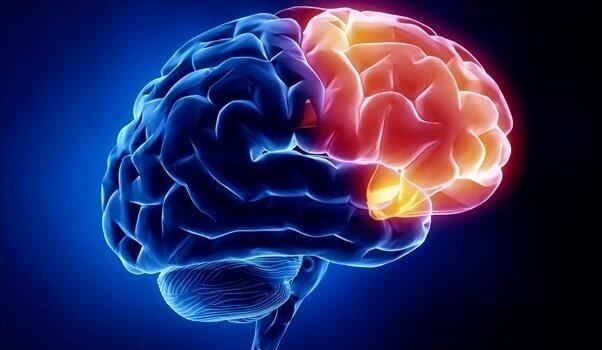 cortex orbitofrontal