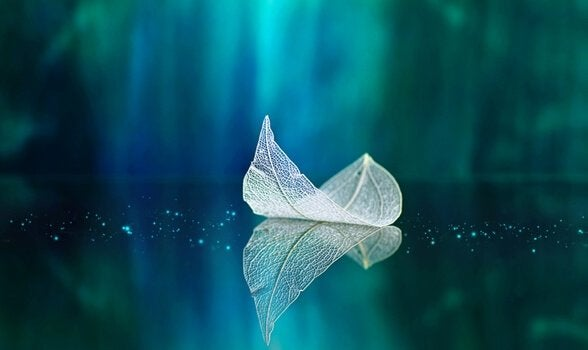 feuille sur l'eau