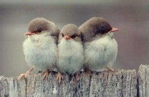 trois oiseaux