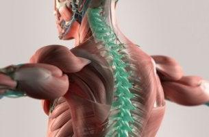 Liquide céphalo-rachidien : le support de notre système nerveux central