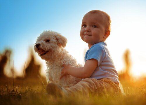 Les animaux et les bébés : les avantages de grandir ensemble