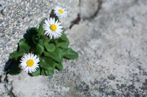 fleurs sur une route représentant l'affrontement de l'adversité