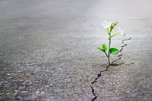 plante dans la route qui représente le fait de surmonter un souvenir traumatique