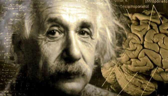 L'incroyable histoire du cerveau d'Albert Einstein