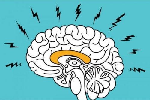 cerveau anxieux