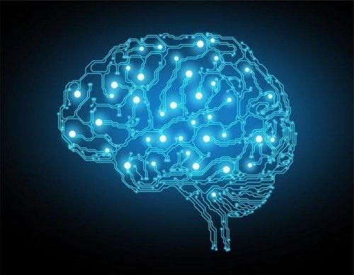 fonctions exécutives du cerveau