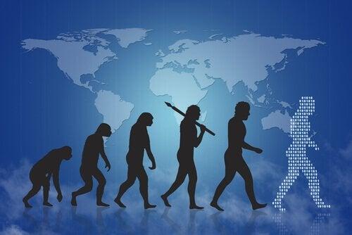 L'évolution humaine pour expliquer la sélection naturelle