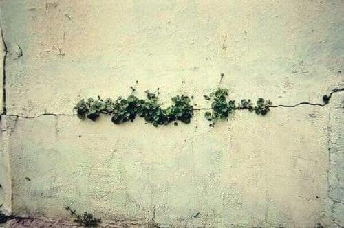 fleurs dans un mur, qui illustrent que nous pouvons tout surmonter