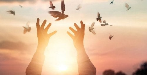 mains et oiseaux