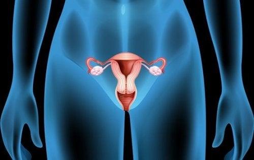 Kystes ovariens : symptômes, causes et traitements