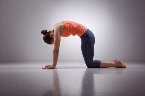 postures de yoga : posture du chat