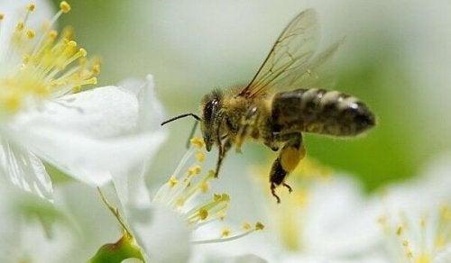 apprendre des abeilles