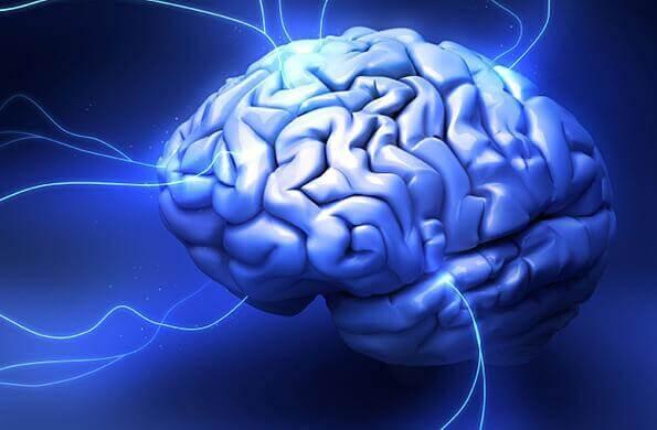 cerveau triunique
