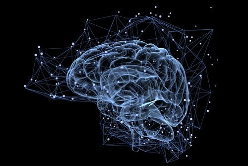 norépinéphrine dans le cerveau