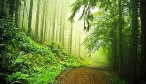 test de la forêt