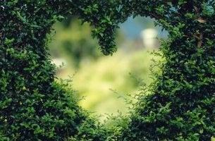 Haie en forme de coeur