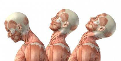 flexion cervicale