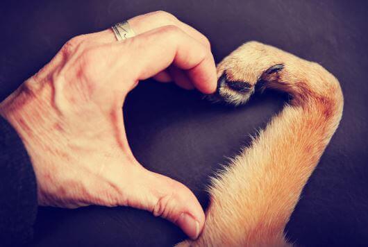 amour un animal et un humain
