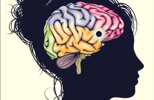 Le noyau accumbens, un centre d'apprentissage, de motivation et de plaisir