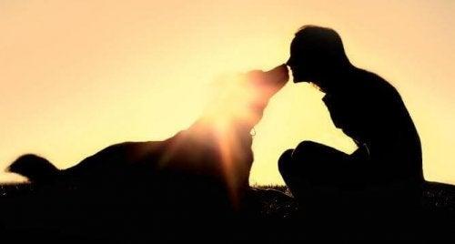 les moments partagés avec son animal de compagnie