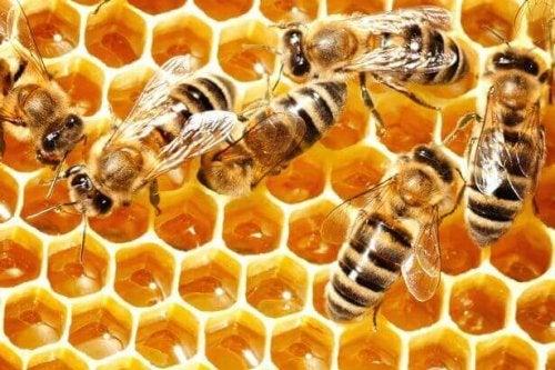 nous avons beaucoup à apprendre des abeilles