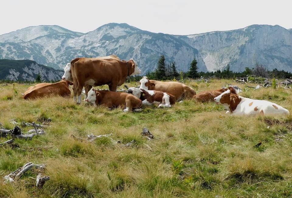 révolution du Néolithique et agriculture