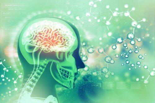 cerveau et acide folique