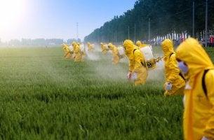 effets des pesticides sur le cerveau