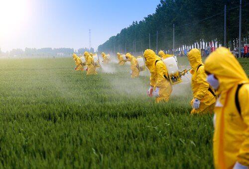 Les effets des pesticides sur le cerveau