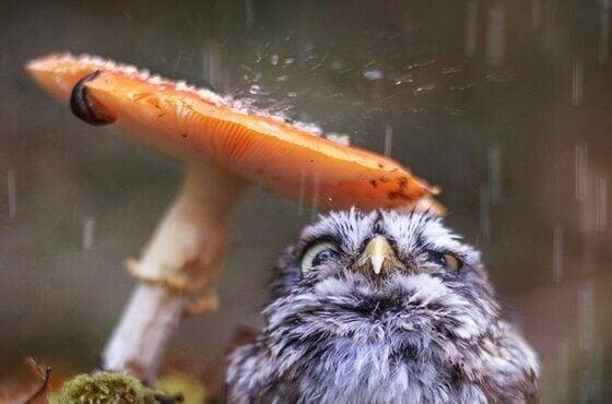 l'effet du son de la pluie