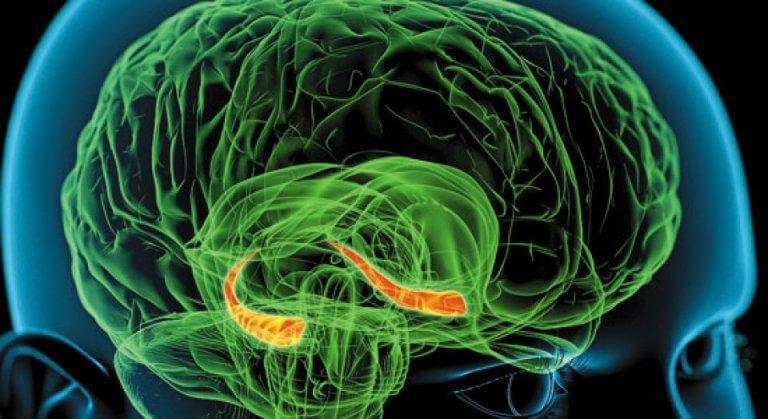 l'hippocampe et nos rêves
