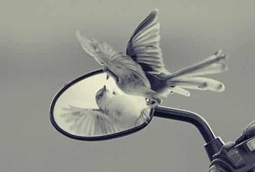 Les pièges de l'ego qui s'opposent à notre liberté et à notre développement personnel