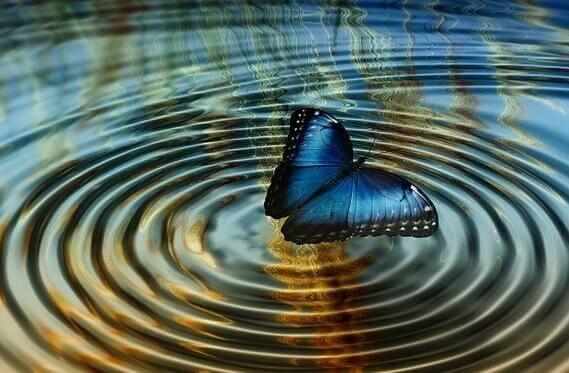 La théorie du chaos: lorsque le battement d'ailes d'un papillon peut tout changer