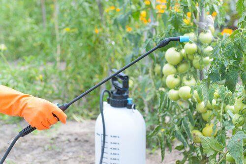 effets des pesticides et développement