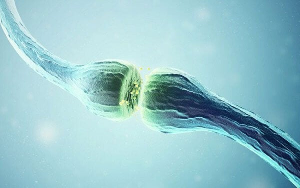 synapse d'acétylcholine