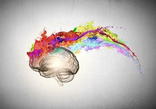 cerveau avec couleurs représentant l'emdr