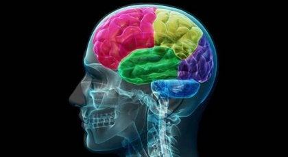 Le cerveau dépendant : anatomie de la compulsion et du besoin