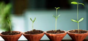 psychologie intégrale et développement personnel, ici représenté par des plantes
