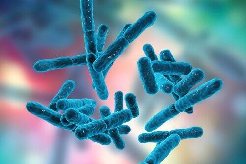 bactéries et système nerveux entérique