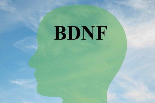 Comment augmenter le BDNF, protéine clé pour les cellules cérébrales saines