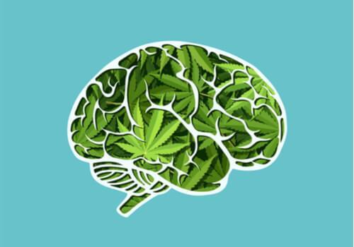 Les effets à long terme du cannabis sur le cerveau
