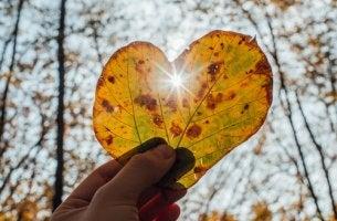 feuille en forme de coeur