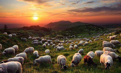 Le conte oriental du magicien et ses moutons